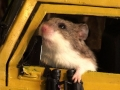 mouse-out-window-with-bin